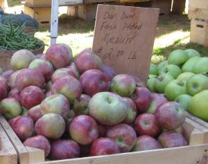 apple macoun