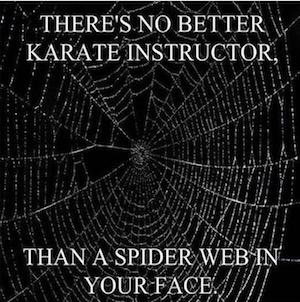spider web 300